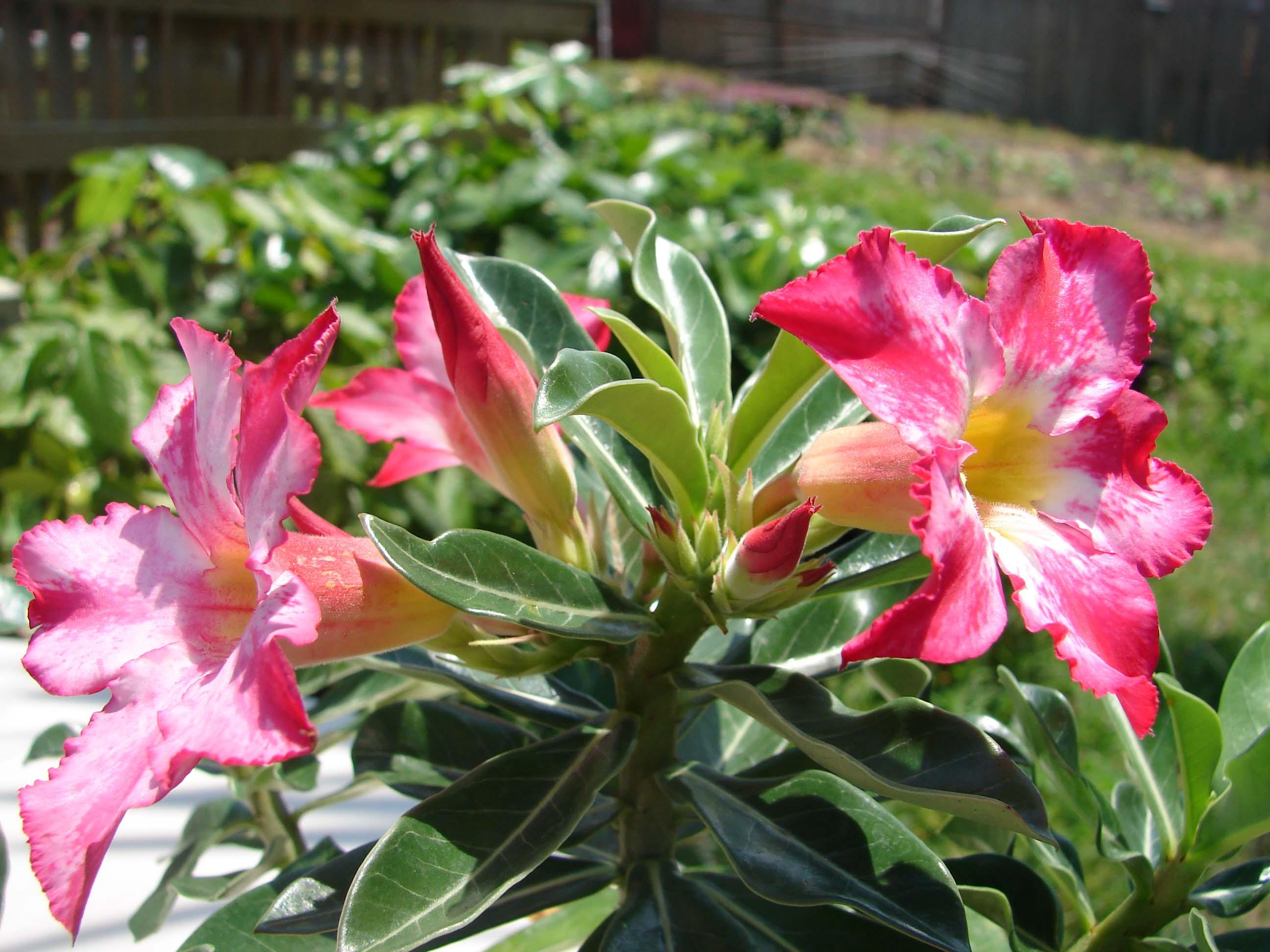 Beautiful Rare Flowers Names Comousar